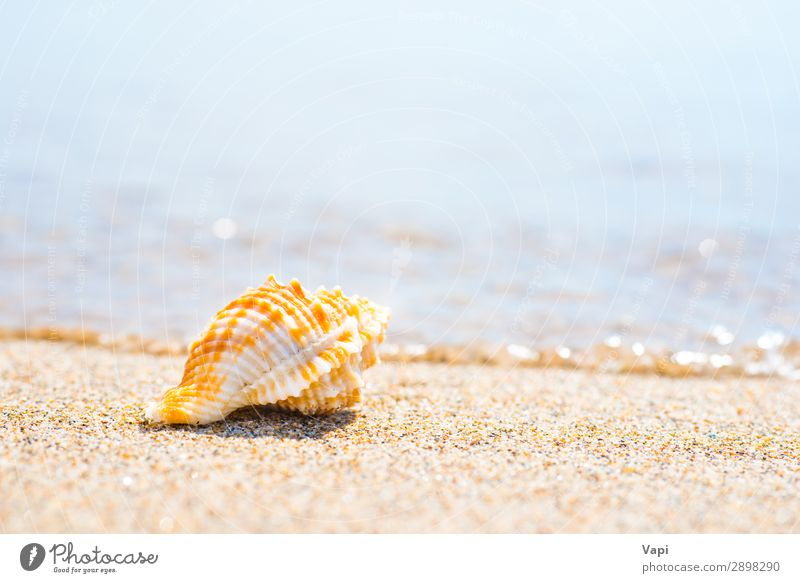 Macro shot of shell at sand beach Lifestyle Beautiful Relaxation Leisure and hobbies Vacation & Travel Tourism Trip Adventure Summer Summer vacation Beach Ocean