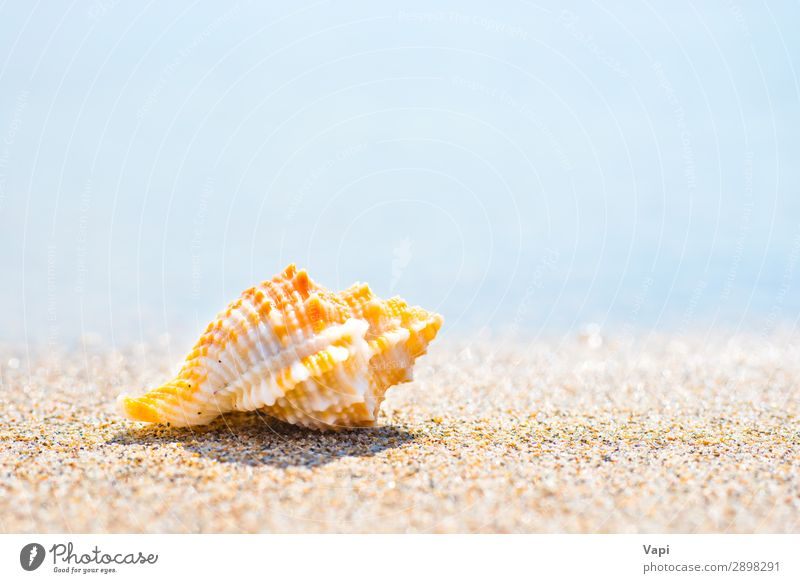 Macro shot of shell at sand beach Sky Vacation & Travel Nature Summer Blue Beautiful Water White Landscape Red Ocean Relaxation Animal Beach Yellow Environment