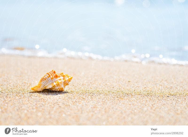Macro shot of shell at sand beach Vacation & Travel Nature Summer Blue Beautiful Water White Landscape Ocean Relaxation Animal Beach Yellow Environment Natural