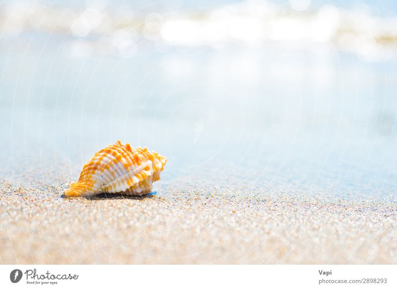 Macro shot of shell at sand beach Vacation & Travel Nature Summer Blue Beautiful Water White Landscape Sun Ocean Relaxation Animal Beach Yellow Environment