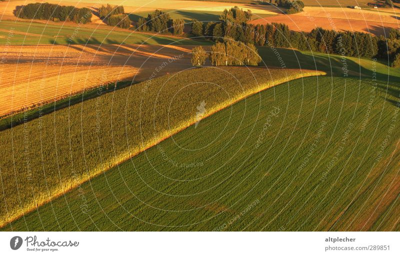 Nature Green Summer Tree Landscape Yellow Brown Field Earth Leisure and hobbies Beautiful weather Perspective Bushes Driving Geometry Shadow play