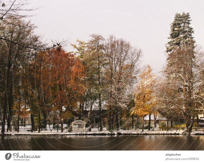 first snow Nature Plant Water Autumn Bad weather Snow Tree Pond Small Town Wild animal Bird Group of animals Cold Brown Yellow Gray Orange Black Calm Esthetic