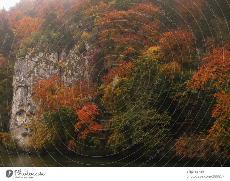 Nature Tree Colour Leaf Animal Autumn Rock Fog River River bank Autumn leaves Splendid Danube Deciduous forest