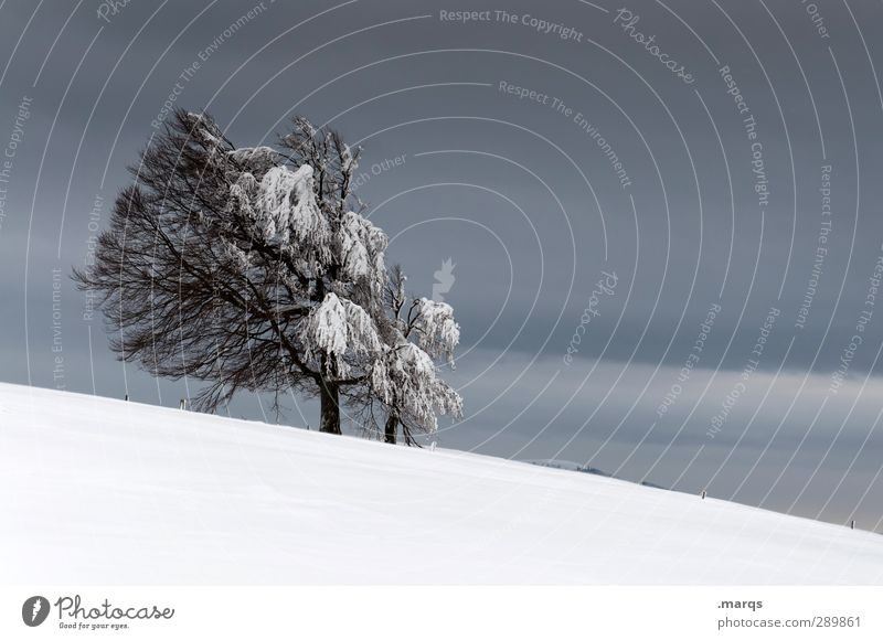 Sky Nature Tree Winter Landscape Environment Dark Cold Snow Moody Ice Weather Climate Trip Frost Sign