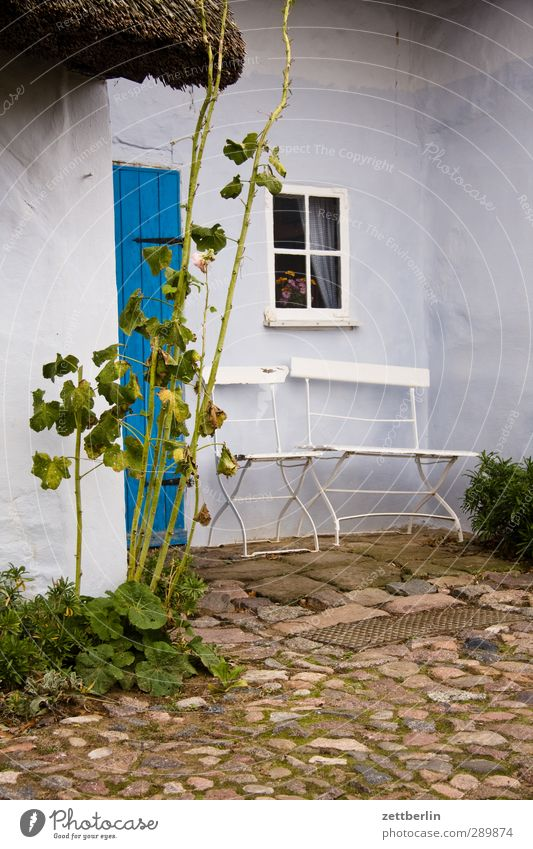 Nature Old Summer Plant Flower Leaf House (Residential Structure) Environment Window Wall (building) Wall (barrier) Garden Door Beautiful weather Rose Chair