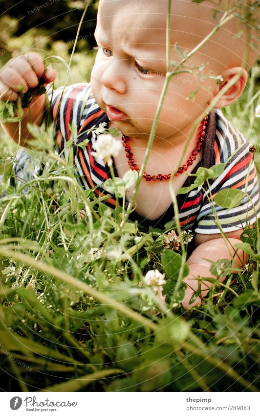 Deep jungle Masculine Baby Boy (child) Infancy Head 1 Human being 0 - 12 months Environment Nature Earth Summer Grass Meadow Observe Touch Discover Crawl Study
