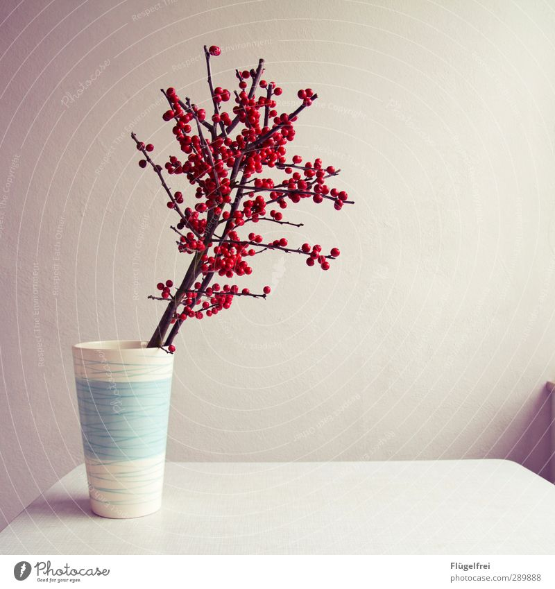 Plant Red Growth Empty Table Blossoming Harmonious Vase Poison Twigs and branches Minimalistic Rawanberry