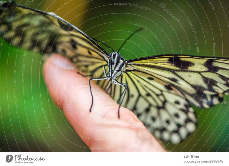 Animal Exceptional Flying Wild animal Sit Skin Fingers Touch Near Butterfly Smooth Forefinger Judder Landing Strip