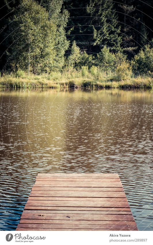 To the other side Nature Landscape Water Summer Tree Grass Bushes Lakeside Blue Brown Yellow Green Self-confident Footbridge Colour photo Deserted