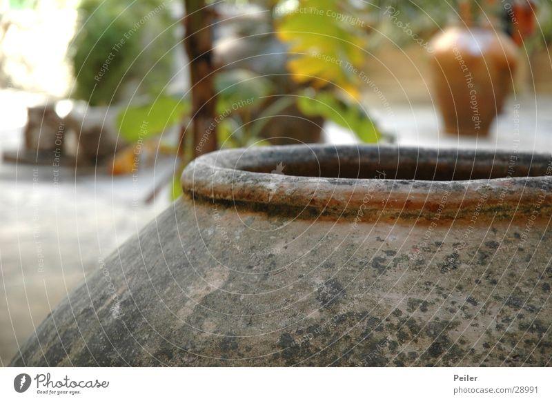 In the pot Water jug Palm tree Earthenware jug Gray Green Historic