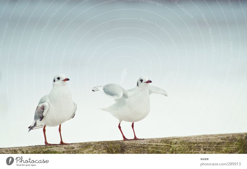 I'll get out of here. Environment Nature Elements Air Sky Cloudless sky Winter Animal Wild animal Bird 2 Pair of animals Bright Cold Small Cute White Seagull