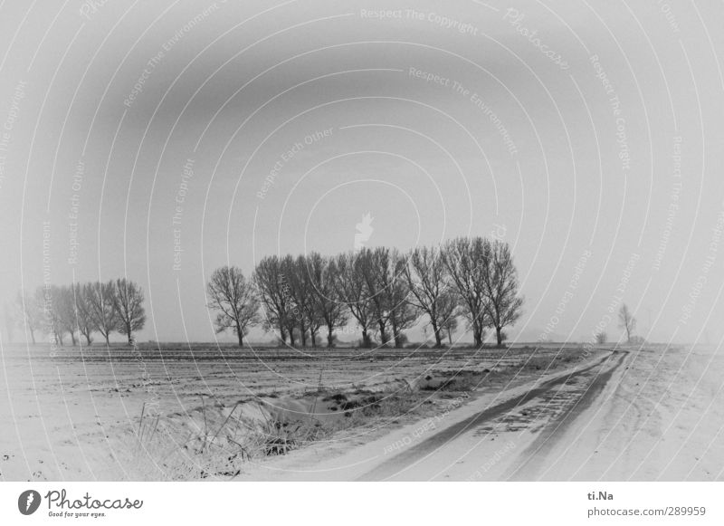 White Winter Black Snow Gray Ice Natural Climate Frost Silver Avenue Schleswig-Holstein Overland route