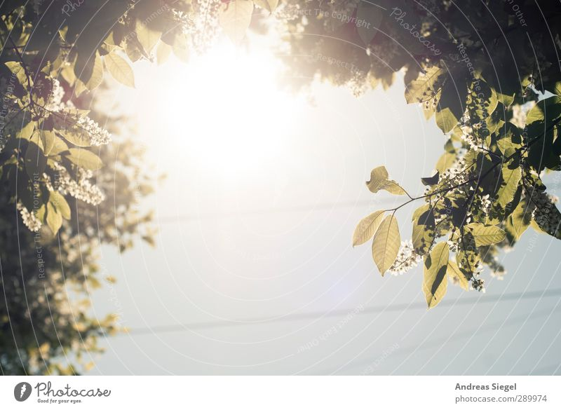 above Environment Nature Landscape Sky Cloudless sky Sun Spring Beautiful weather Plant Tree Leaf Blossom Foliage plant Bright Colour photo Exterior shot