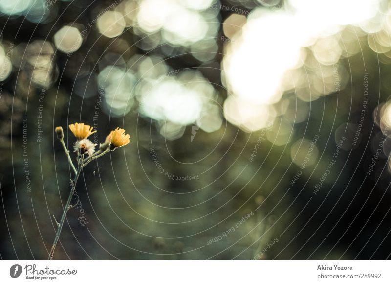 Nature Green Flower Yellow Blossom Dream Natural Illuminate