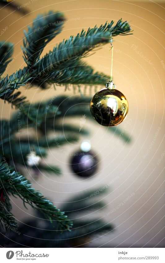 Human being Christmas & Advent Green Yellow Gold Living or residing Decoration Desire Christmas tree Sphere Fir tree Hang Fir branch Christmas tree decorations