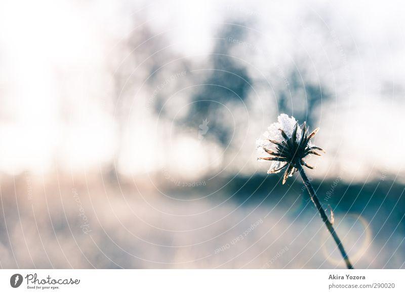 Nature Flower Winter Landscape Cold Blossom Natural Fresh Frost