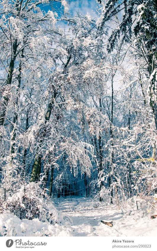 Sky Nature Blue White Winter Forest Brown Natural Beautiful weather Deciduous forest