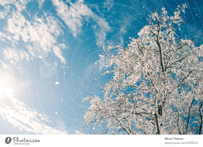 Sky Nature Tree Clouds Landscape Snow Snowfall Beautiful weather