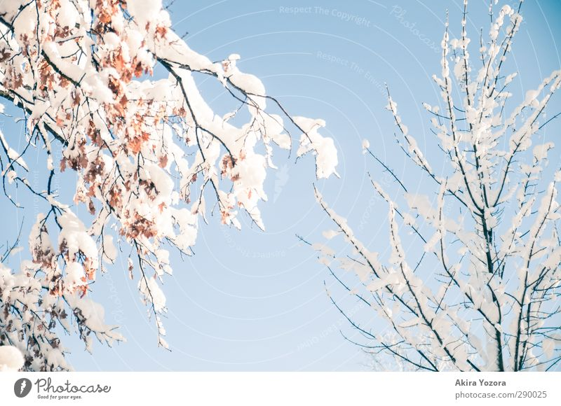 Sky Nature Tree Leaf Winter Snow Natural Branch Cloudless sky