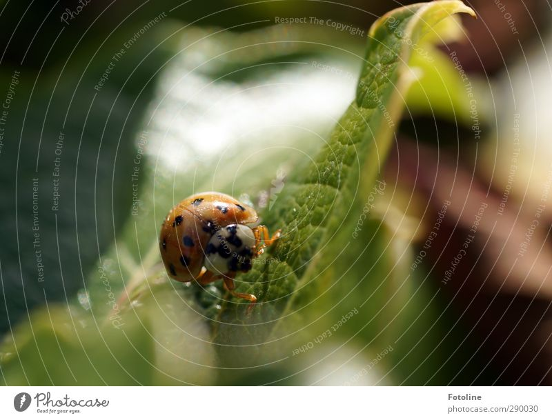 A Happy New Year Environment Nature Plant Animal Summer Leaf Garden Beetle Animal face 1 Bright Small Natural Green Red Black Insect Crawl Ladybird Colour photo