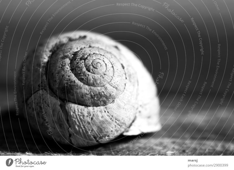 Marked by life Animal Snail shell 1 Spiral Old Dark Creepy Cold Natural Power Sadness Grief Death Loneliness Exhaustion Senior citizen Uniqueness End Transience