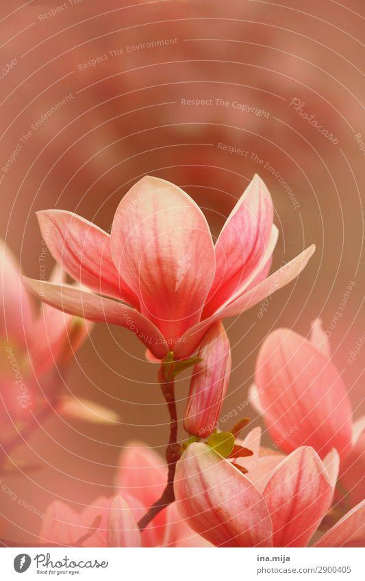 Nature Summer Plant Colour Beautiful Tree Flower Environment Blossom Spring Garden Pink Park Elegant Esthetic Idyll