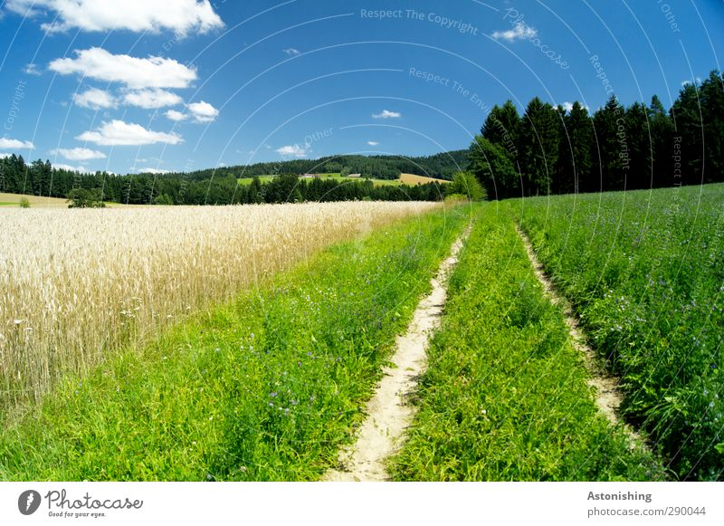 partly cloudy Environment Nature Landscape Plant Sky Clouds Summer Weather Beautiful weather Warmth Grass Bushes Foliage plant Meadow Field Forest Hill