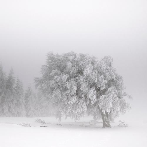 White Tree Loneliness Winter Landscape Black Dark Mountain Cold Snow Natural Ice Fog Hiking Adventure Gloomy
