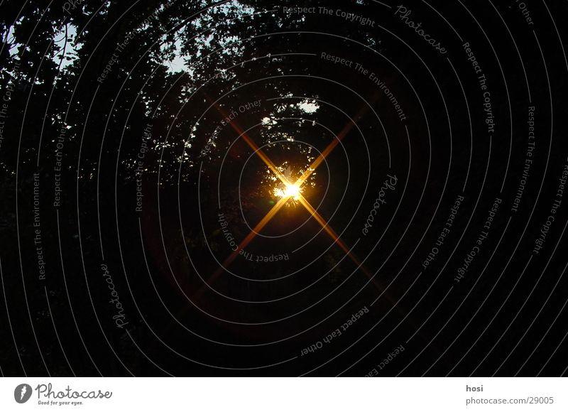 sun hole Sunset Forest Tree Lighting Nature