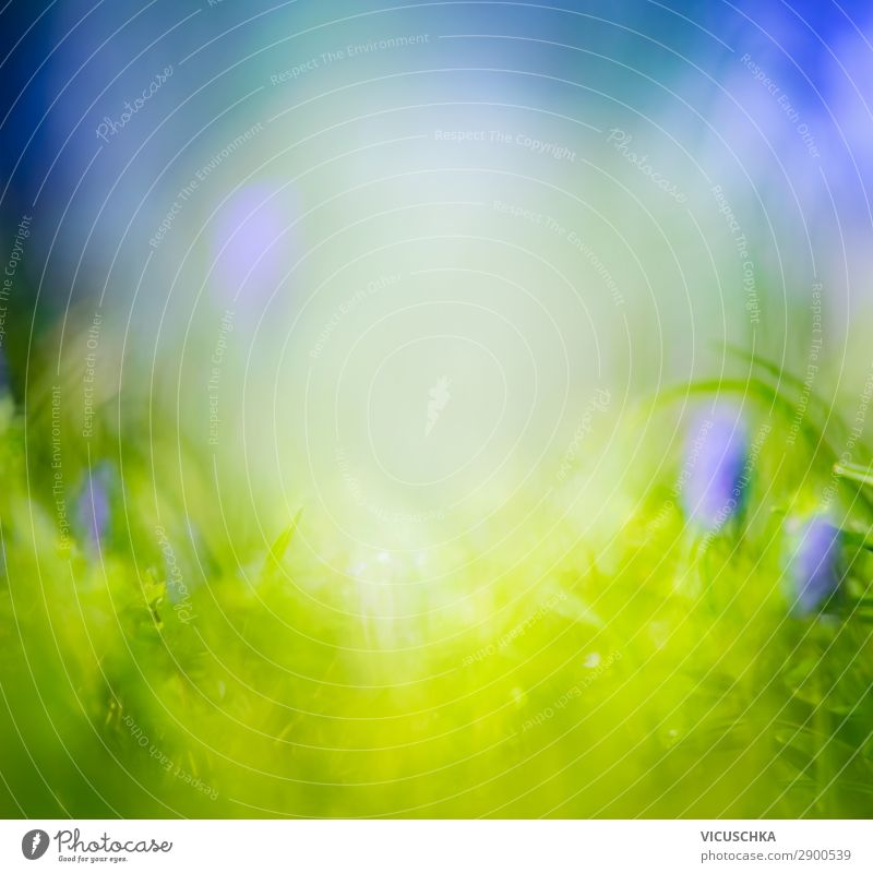 Nature Summer Plant Flower Background picture Lifestyle Spring Meadow Grass Garden Design Park Beautiful weather Soft