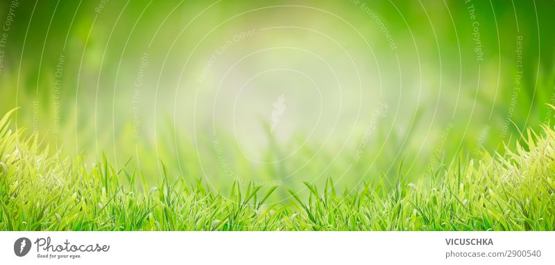 Background with green grass Lifestyle Design Summer Garden Nature Plant Spring Grass Park Meadow Flag Soft Background picture Grassland Grass green Green Lawn