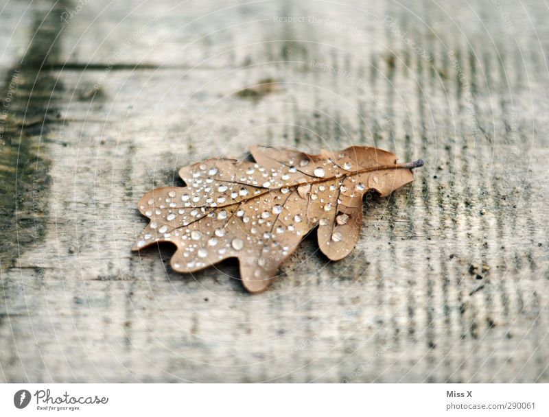 rope Drops of water Autumn Rain Leaf Old Wet Oak leaf Dew Wood Colour photo Subdued colour Close-up Deserted Copy Space top Copy Space bottom