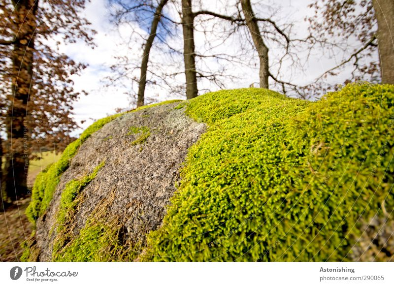 moss Environment Nature Landscape Sky Clouds Autumn Weather Plant Tree Grass Bushes Moss Leaf Wild plant Forest Soft Blue Gray Green Stone Rock Branch