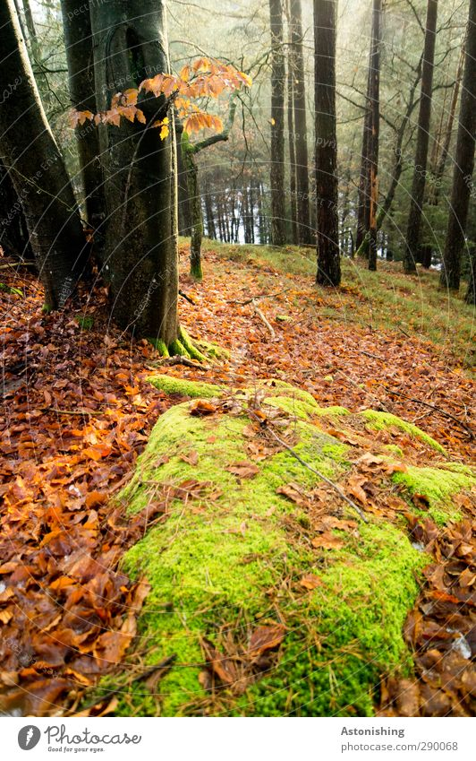 Nature Green Plant Tree Red Leaf Landscape Black Forest Environment Autumn Grass Stone Air Rock Weather
