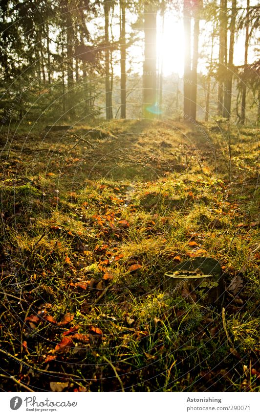 Sky Nature Green Plant Tree Sun Landscape Black Forest Yellow Environment Warmth Autumn Grass Wood Bright