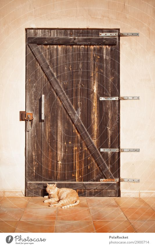 #A# chill out area Art Esthetic Cat Door Relaxation Recreation area Idyll Peaceful Front door Mediterranean Colour photo Subdued colour Exterior shot Detail