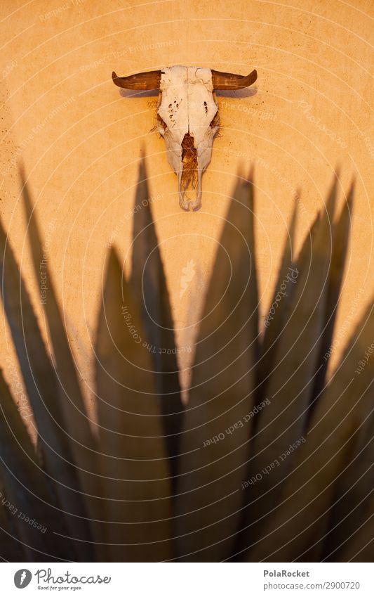 #A# DeadWall Art Esthetic Death Look of death Mortal agony Badlands Drought Warmth Death's head Animal skull Death valley Nationalpark Cactus Obituary