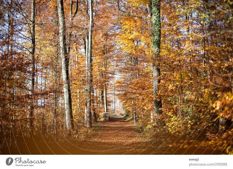 autumn Environment Nature Landscape Autumn Beautiful weather Forest Yellow Gold Orange Leaf Deciduous tree Deciduous forest Colour photo Exterior shot Deserted