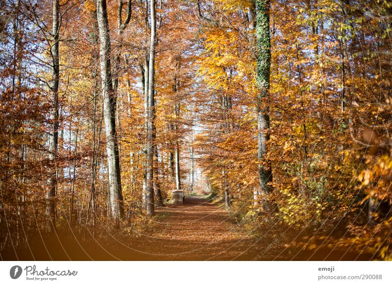 Nature Leaf Landscape Forest Yellow Environment Autumn Orange Gold Beautiful weather Deciduous tree Deciduous forest