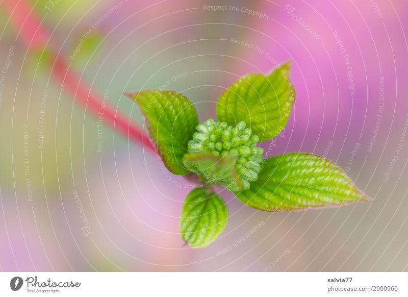 Nature Plant Colour Green Animal Leaf Environment Spring Fresh Growth Beginning Bushes Change Hope Violet Twig