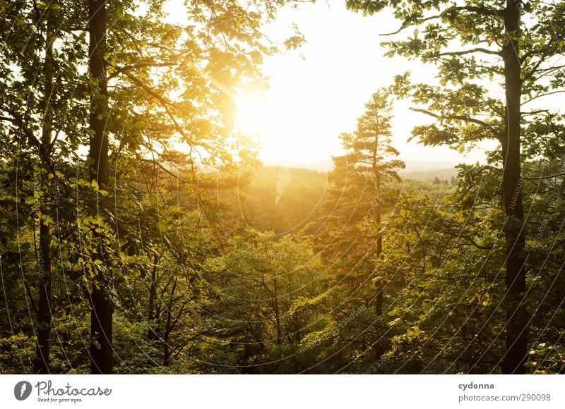 evening sun Harmonious Well-being Relaxation Calm Tourism Adventure Far-off places Freedom Hiking Environment Nature Landscape Sunrise Sunset Summer Tree Forest