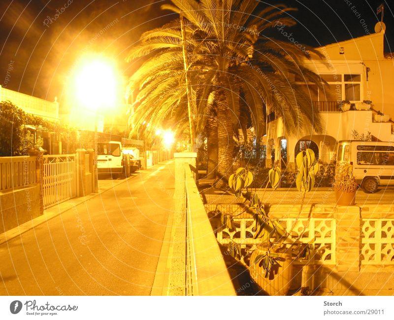 street Night Long exposure Palm tree Spain Vacation & Travel Moral Street