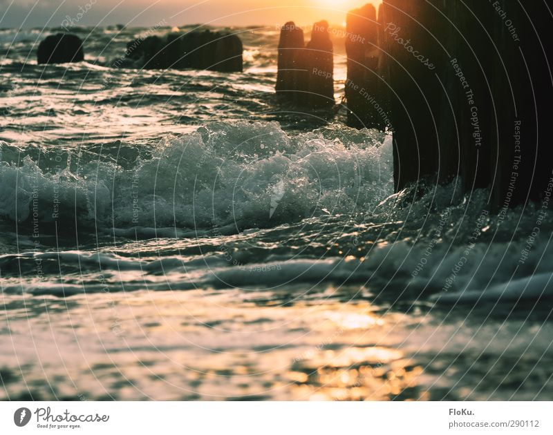 Waves in the evening light Vacation & Travel Far-off places Freedom Summer Summer vacation Sun Beach Ocean Environment Nature Elements Water Sunrise Sunset