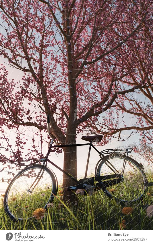 Lean back Lifestyle Leisure and hobbies Cycling Trip Adventure Sun Sports Bicycle Nature Plant Beautiful weather Tree Blossom Garden Park Meadow Field