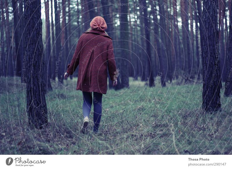 Little Red Riding Hood in the Forest Winter Hiking Poverty Beautiful Green Grass Loneliness Tree Cap Coat Freedom Wild Tights Blue Going To go for a walk