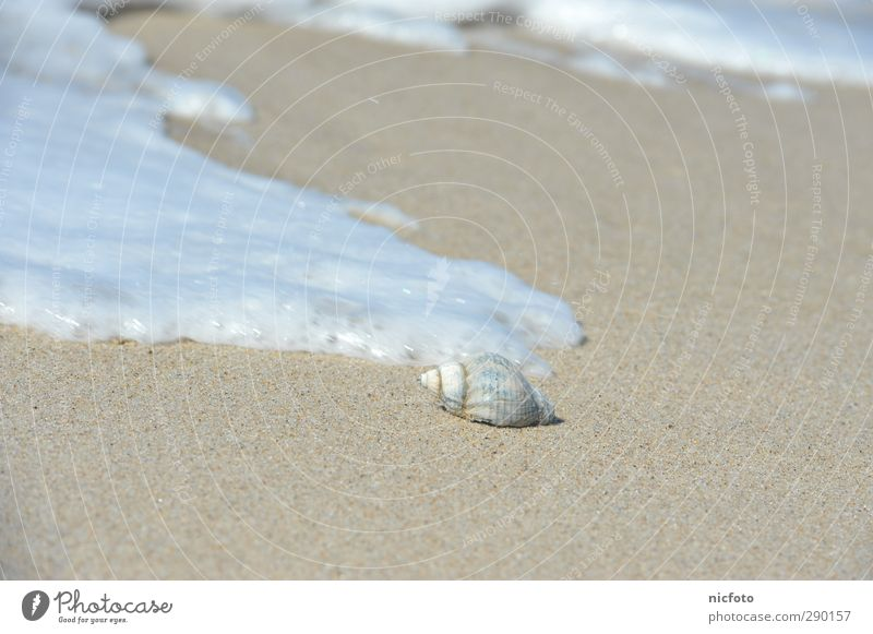 Shell in the surf Nature Elements Earth Sand Water Waves Coast Beach North Sea Baltic Sea Ocean Simple Fluid Infinity Good Bright Wet Natural Beautiful Brown