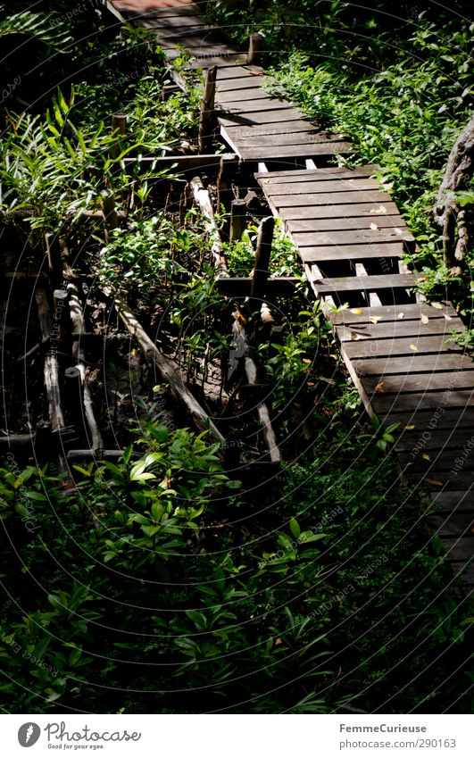Beeing on a visit to Tarzan. Nature Landscape Sustainability Virgin forest Footbridge Lanes & trails Wooden bridge Forest Warmth Plant Cambodia Asia Deserted