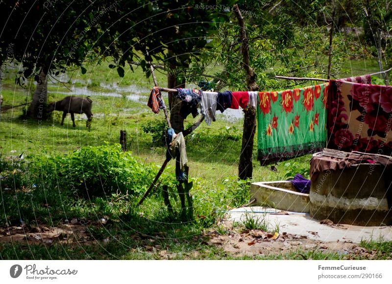 Idyll. Nature Climate Beautiful weather Plant Tree Meadow Field National Park Indigenous Clothesline Laundry Wash Farm animal Farmer Blanket Asia Cambodia Rural