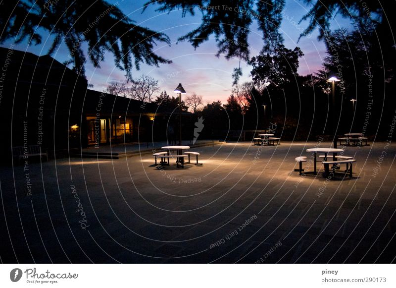 campus Chair Table Warmth Blue cafeteria Dining hall branches building glow Colour photo Exterior shot Deserted Evening Twilight Night Artificial light Contrast