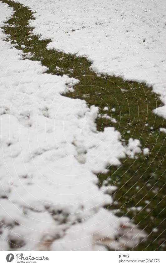 snow path Environment Nature Winter Snow Grass Cold Curiosity Green White snowball winding Colour photo Subdued colour Exterior shot Deserted Contrast